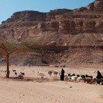 Bedouin & Acacia